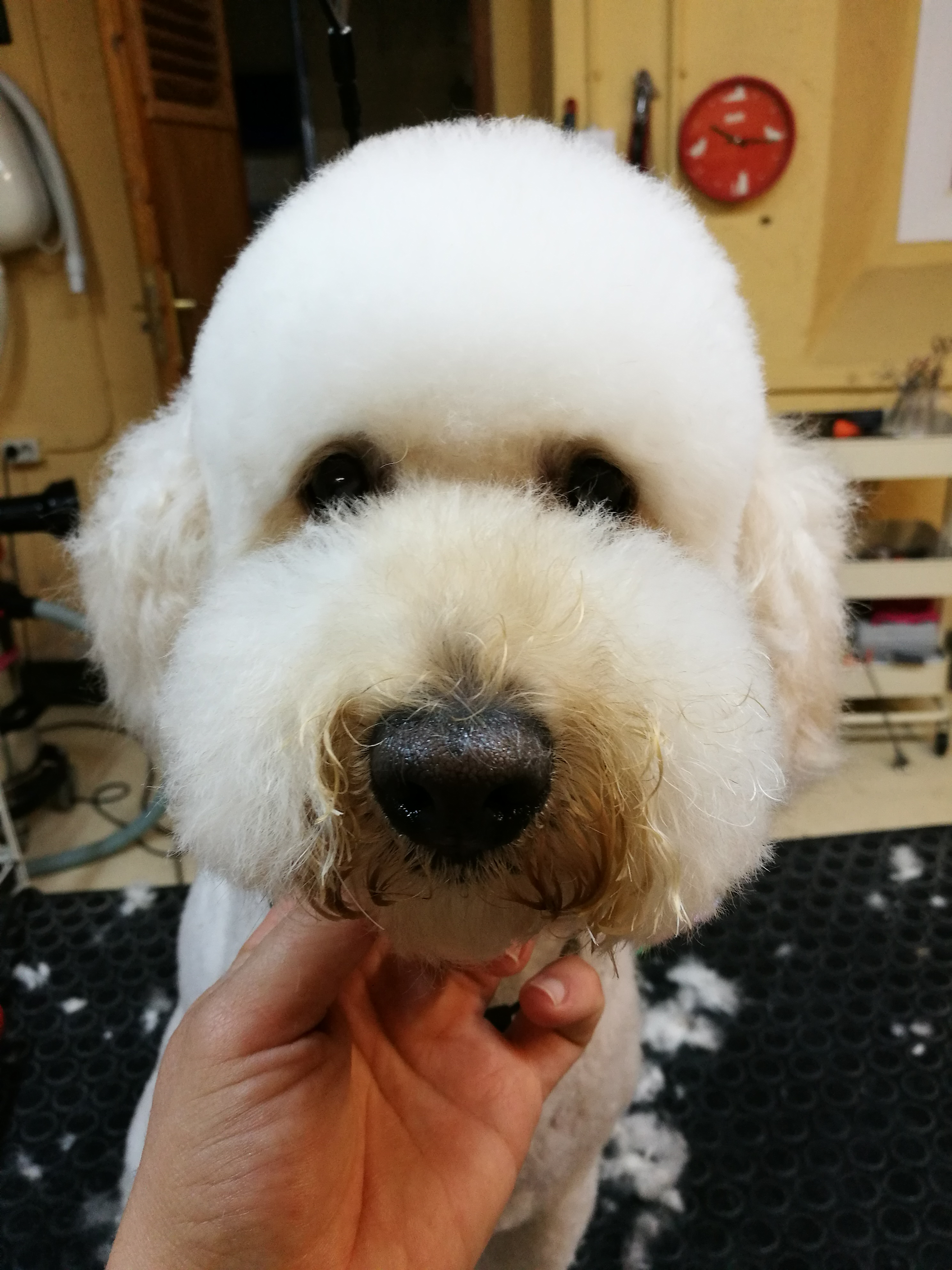 peluqueria canina maresme