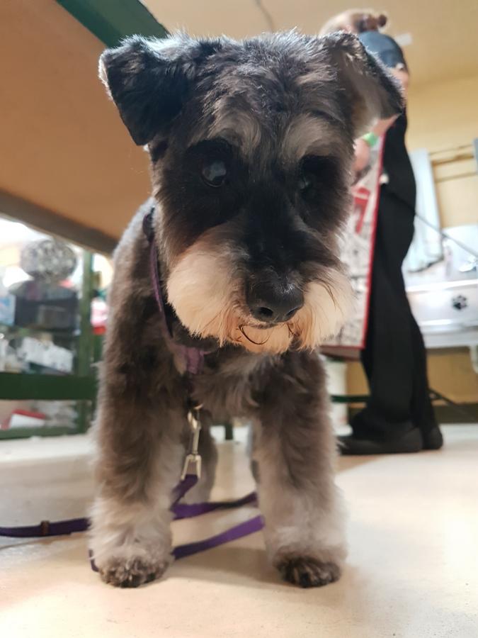 B&G PETSHOP - Peluqueria canina. Vilassar