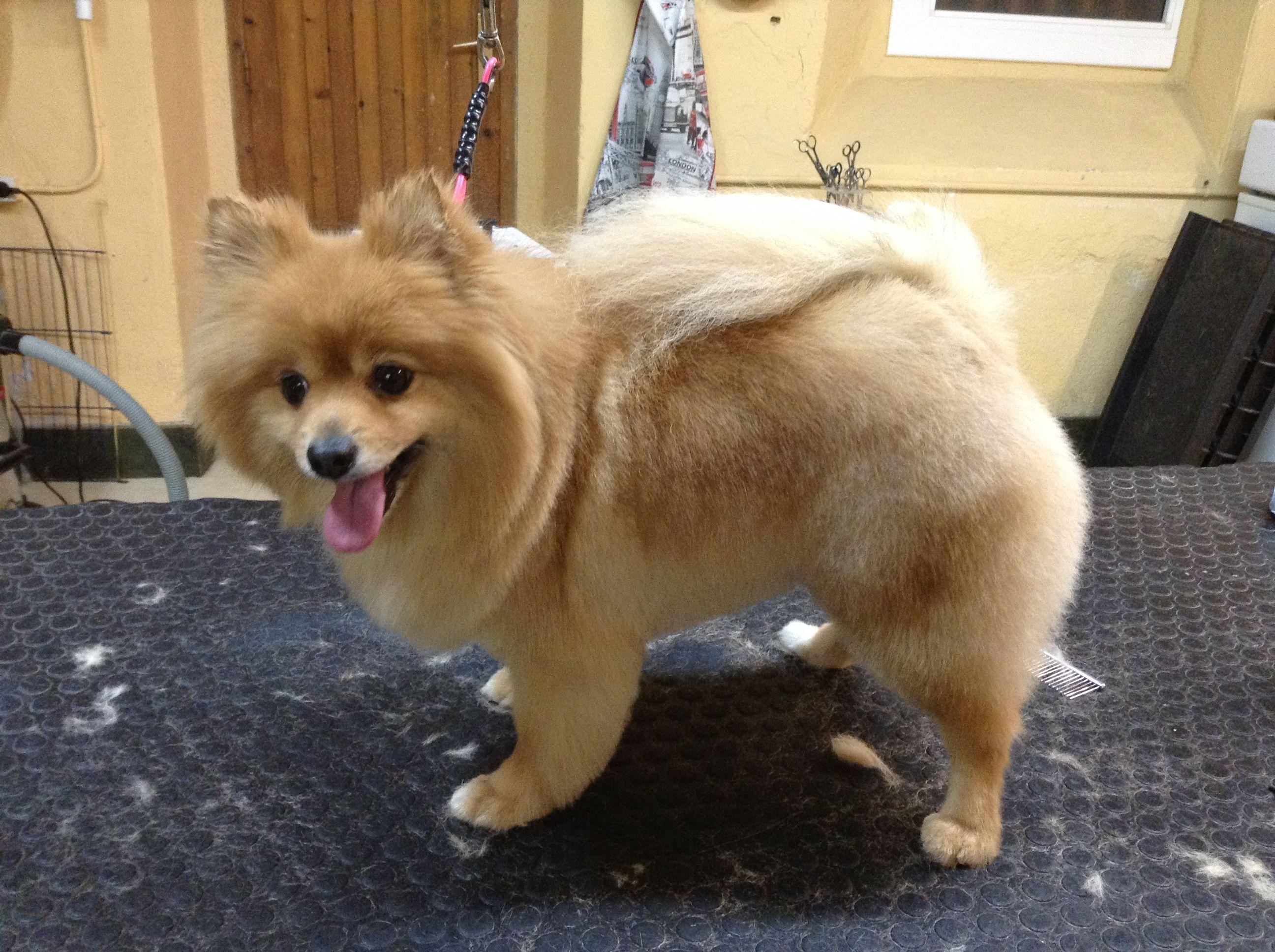 B&G PETSHOP - Peluqueria canina. Vilassar de dalt