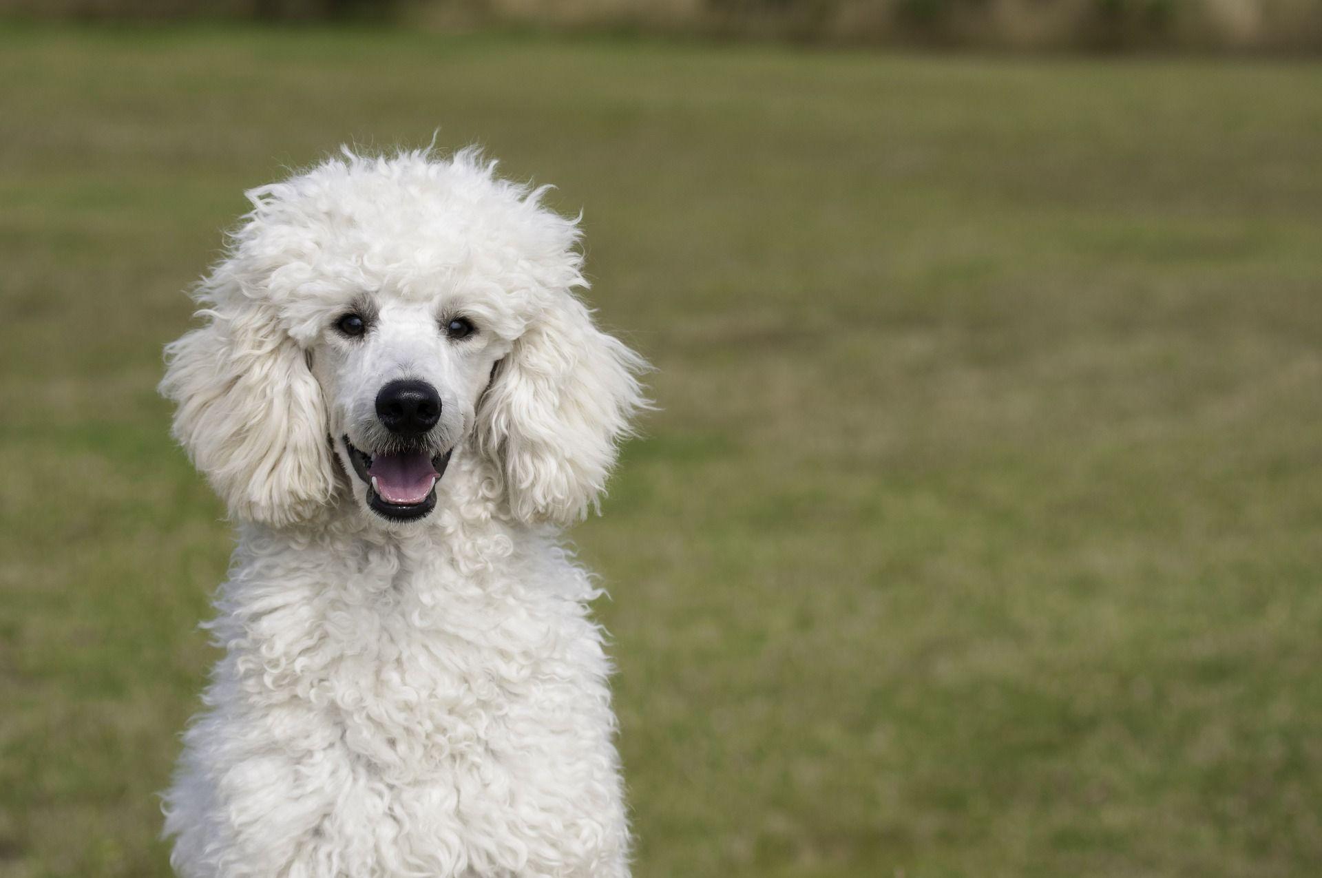 B&G PETSHOP - Perruqueria i estètica canina. Vilassar de dalt